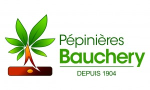 Bauchery