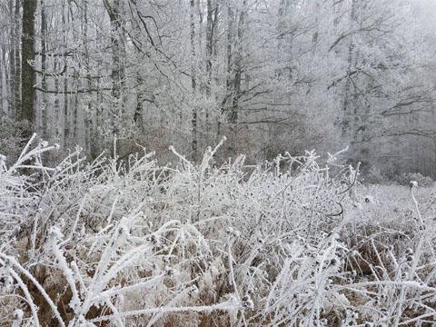 Votre parcours du Trail des Moulins en hiver